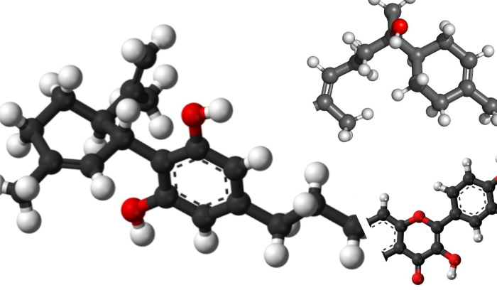 Feature image for Putting the Oid in Terpenoids Article